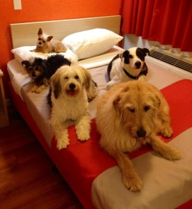 dogs in bed-bios