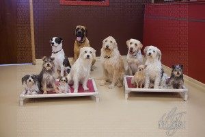 "The canine cast of ""Marshall The Miracle Dog."""