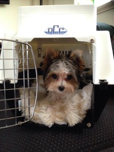 Zackary is new mascot for Pet Cooler Carriers.