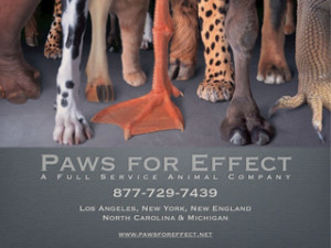 Paws For Effect